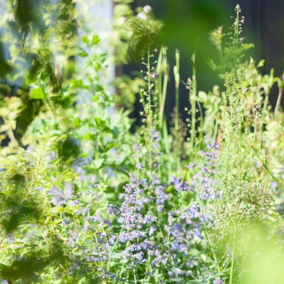 Konttinens trädgård 8